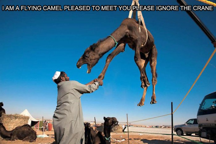 I-am-a-flying-camel-700x466